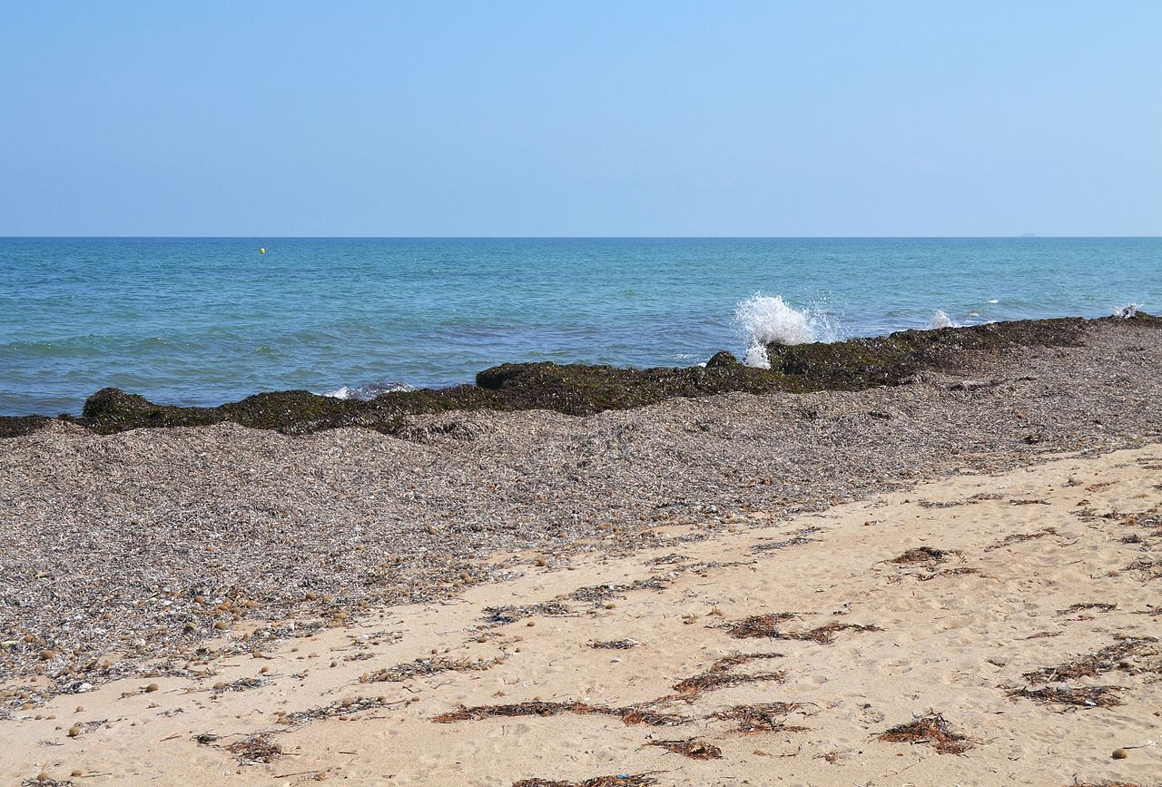 Resultado de imagen de posidonia oceanica seca