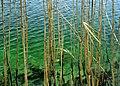 Plitvice. Flora 11.jpg