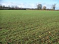 Ploughed and planted - geograph.org.uk - 1603941.jpg