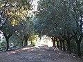Poggio di Rocca, Montopoli, 13.JPG