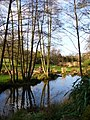 Pond by Lye Wood - geograph.org.uk - 303083.jpg