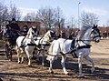 Ponys Einhorn.jpg