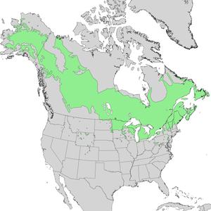 Populus balsamifera - Image: Populus balsamifera range map 1