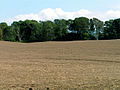 Prepared Field - geograph.org.uk - 49882.jpg