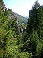 Pseudotsuga glauca Eldorado Canyon 1.jpg