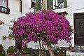 Purple (46100195722).jpg