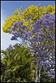 Purple Yellow Blue at Grafton-4 (22692743805).jpg