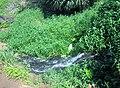 Queen's Bath Kauai - panoramio (19).jpg