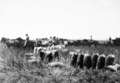 Queensland State Archives 4108 Bagging wheat Clifton Darling Downs c 1930.png