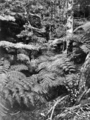Queensland State Archives 421 Morans Creek Lamington National Park Beaudesert Shire September 1933.png