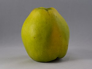 Quince - Commercially grown quince.