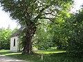 Quirinskapelle Gosheim (104).jpg