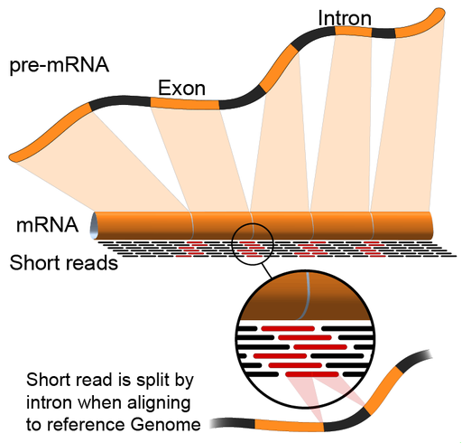 RNA-Seq-alignment