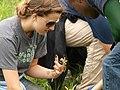 Rachel Carson Natl Wildlife Refuge, ME (5167841978).jpg