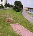 Radweg Limburgerhof 01.JPG