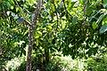 Rancho Español 32000, Dominican Republic - panoramio (29).jpg