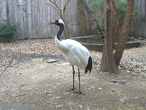 National Aviary - Image: Red Crowned Crane 2
