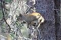 Red Squirrel (01b9934a-2d5a-434a-ae81-e8017ee34ec0).jpg