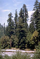 Redwood National Park REDW9346.jpg