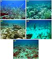 Reef-Fishes-of-Saba-Bank-Netherlands-Antilles-Assemblage-Structure-across-a-Gradient-of-Habitat-pone.0009207.g004.jpg