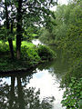 Reflections on the Kennet River, Woolhampton - geograph.org.uk - 27622.jpg
