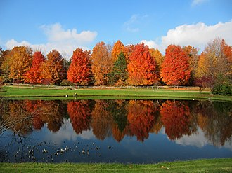 Grandville, Michigan - A pond fronting a forest of maple trees in Grandville.