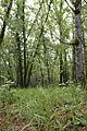 Ressource herbacée de sous bois.jpg