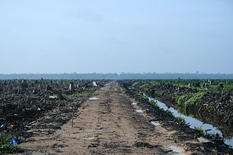 Deforestation in Indonesia - Deforestation in Riau province, Sumatra, to make way for an oil palm plantation (2007).