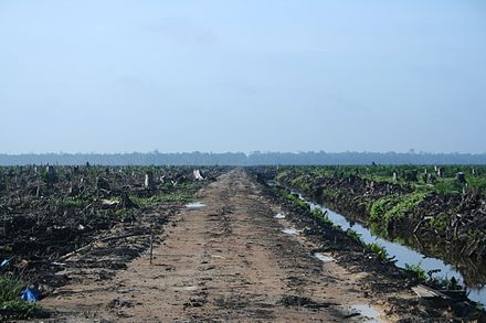 Deforestation in Riau, Sumatra, to make way for an oil palm plantation Riau palm oil 2007.jpg
