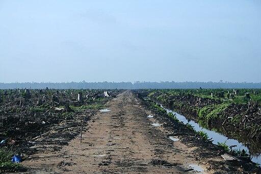 Riau palm oil 2007