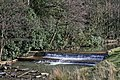 River Calder near Towneley - geograph.org.uk - 656970.jpg