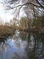 River Cam downstream of Byron's Pool - geograph.org.uk - 2188580.jpg