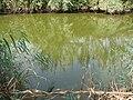 River in jooybar.jpg