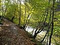 Riverside Path in Calderglen Country Park - geograph.org.uk - 1022164.jpg