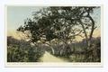 Road to Coconut Grove, Miami, Fla (NYPL b12647398-67585).tiff