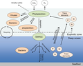 Role of phytoplankton on various compartments of the marine environment.png
