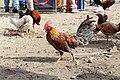 Rooster in Otavalo 02.jpg