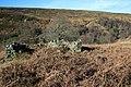 Ruin, Tripsdale - geograph.org.uk - 331308.jpg