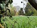 Ruins, near Wards Roughs - geograph.org.uk - 1247306.jpg