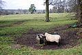 Rural view 2 (2344045722).jpg
