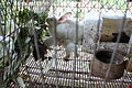 SB040 Rabbit farming Cuba 1.JPG