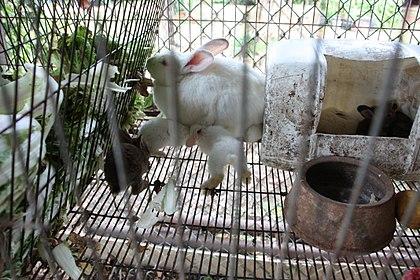 Rabbit Farming Pdf