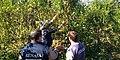 SENASA monitorea plantaciones de yerba mate.jpg