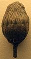 SagenocrinitesExpansus-NaturalHistoryMuseum-August23-08.jpg