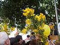 Sagra mimosa-Pieve Ligure-DSCF9171.JPG