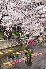 Sakura2561.jpg