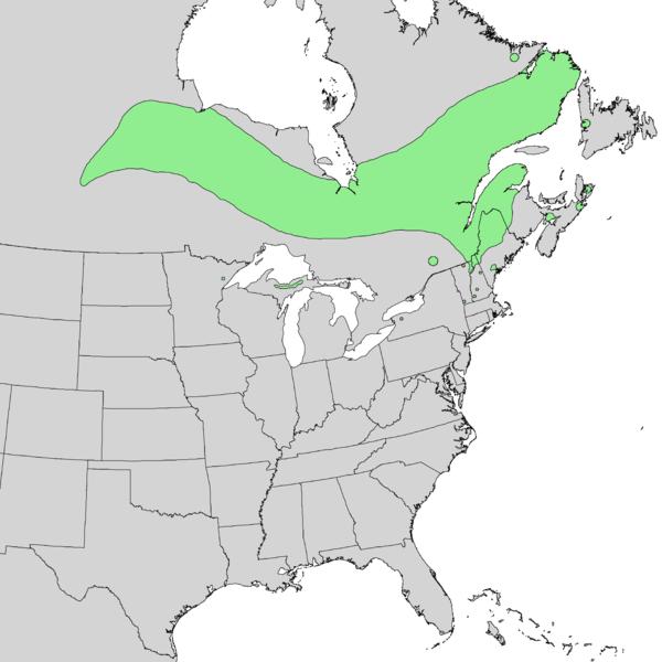 File:Salix pellita range map 2.png