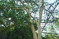 San Diego Zoo Safari Park 26 2014-08-29.JPG