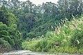 Sangu River 3.jpg