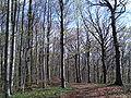 Schinberg forest.jpg